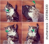 Stock photo funny cat collage 243586330