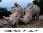 Two White Rhino Are Close Up I...