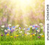 beautiful spring floral meadow... | Shutterstock . vector #243664348