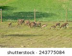 New Deer Herd