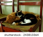 cats sleeping on the chair | Shutterstock . vector #243813364