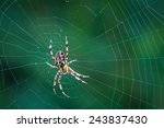 Spider On A Spider Web With A...