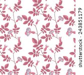dog rose pattern on white... | Shutterstock .eps vector #243851179