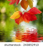 Image Of Leaves Over The Water