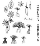 sketch with baobab  | Shutterstock . vector #243894553