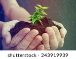 hand and plant  | Shutterstock . vector #243919939