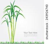 sugar cane vector format | Shutterstock .eps vector #243926740