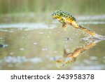 jumping pacman frog with... | Shutterstock . vector #243958378