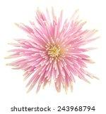 flower isolated on white...   Shutterstock . vector #243968794