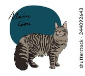 Maine Coon Cat  Vector...