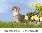 Cats  Easter  With Daffodils O...