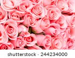 Stock photo pink rose flower bouquet background 244234000