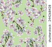 blooming plum  watercolor | Shutterstock . vector #244268428