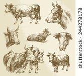 Cows  Farm Animal   Hand Drawn...