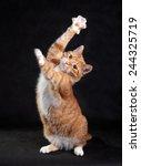 Stock photo dancing cat 244325719