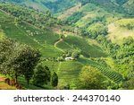 Постер, плакат: Tea plantation in mountain