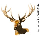 deer head realistic hand drawn... | Shutterstock .eps vector #244432144