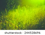 green summer grass meadow close ... | Shutterstock . vector #244528696