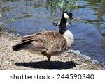Goose. The Goose Is A Bird...
