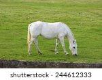 beautiful grey horse grazing  | Shutterstock . vector #244612333