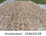 Manioc Root Is Drying Under...