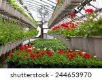 Greenhouse Nursery With A...
