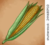 vector vintage engraving... | Shutterstock .eps vector #244680910