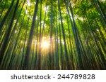 the arashiyama bamboo grove of... | Shutterstock . vector #244789828