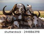 Animal Skulls Buy Animal Skull...