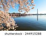 A Peak Of Cherry Blossom Aroun...