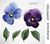 Pansy And Leaves  Watercolor ...