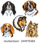 set with dogs heads  difference ... | Shutterstock .eps vector #244970383