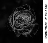 Black Rose On A Black...