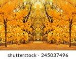 Central Park Autumn In Midtown...