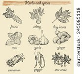 herbs and spices. hand drawing... | Shutterstock .eps vector #245085118