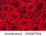 Stock photo beautiful red roses 245087506