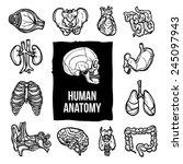 human anatomy internal body... | Shutterstock .eps vector #245097943