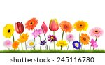 colorful flowers growing in the ... | Shutterstock . vector #245116780