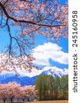 cherry tree and mt.... | Shutterstock . vector #245160958