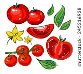 hand drawing collection tomato | Shutterstock .eps vector #245216938