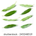 collage of mango leaves | Shutterstock . vector #245248519