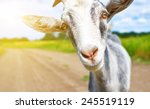 Goat In The Summer Outdoors In...