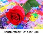 beautiful red rose on colorful... | Shutterstock . vector #245554288