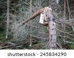Storm Broken Tree