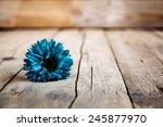 Blue Gerbera Flower  On Wooden...