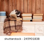 cute cat sitting with book on... | Shutterstock . vector #245901838