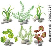 Different Kinds Of Algae And...