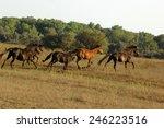 Free Roaming Horse In Romania