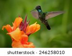Nice Hummingbird  Magnificent...