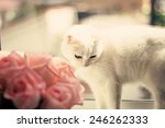 White Cat And Pink Roses